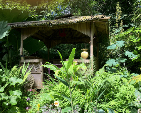 Tropical looking outbuilding surrounded by green plants
