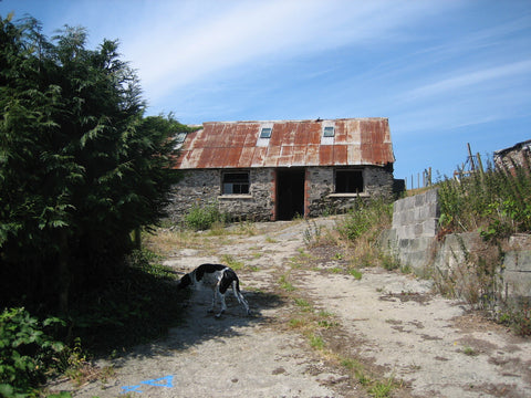 derelict building with a tin roof