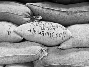 Ethiopia Hunda Oli, New Seasonal Offering
