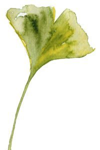 The gingko leaf is the signature of Michele White a jewellery designer based in the Jewellery Quarter in Birmingham