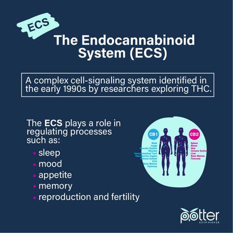 The Endocannabinoid System infographic