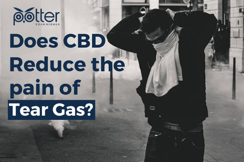 CBD Reduces Pain from Tear Gas