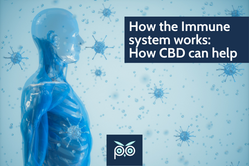 How the immune system works & how CBD can help