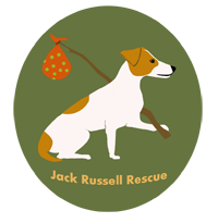 Jack Russell Rescue