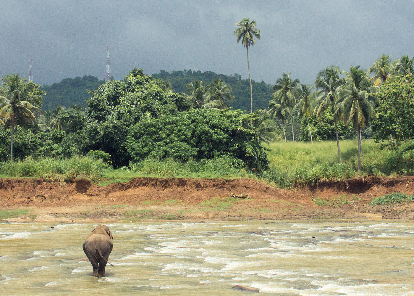 A pregnant elephant meditates in the river