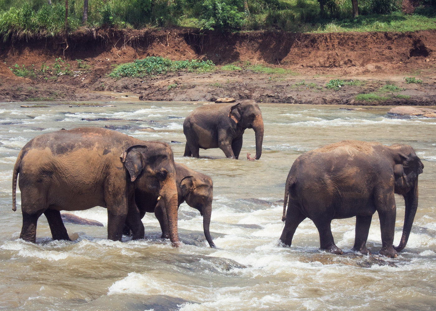 An elephant family trekking through the cool water
