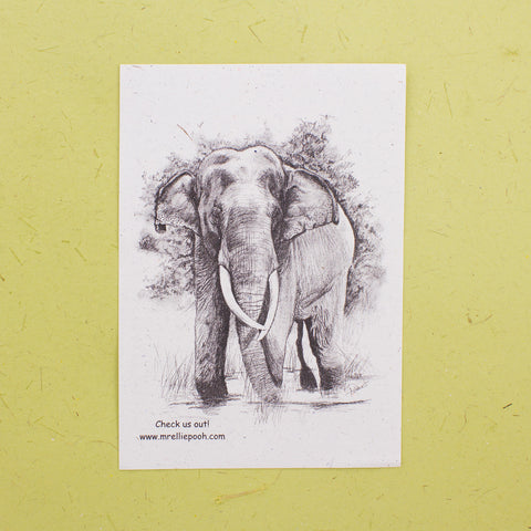 Single Sri Lankan Elephant Educational Pamphlet
