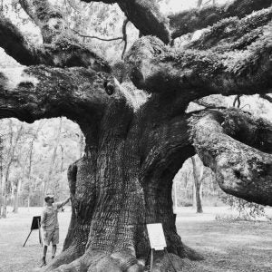 Visiting Angel Oak Tree, Johns Island, SC