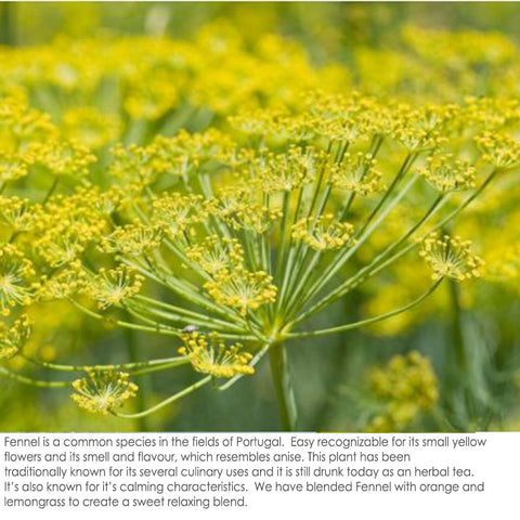 Fennel Fields in Portugal aromatherapy soy candles