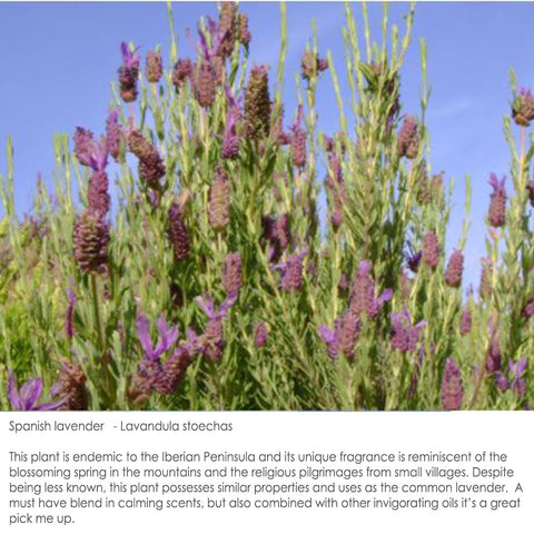wild lavender field in Portugal essential oils for soy wax candles