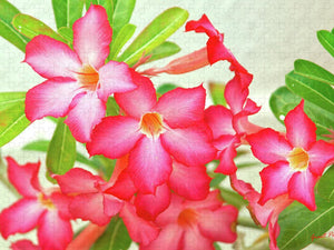 Open image in slideshow, Flower Power - Puzzle