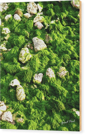 Open image in slideshow, Seaweed and Sunshine - Wood Print