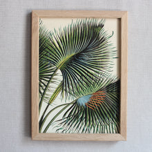 Load image into Gallery viewer, Botanical Print - Medium