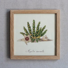Load image into Gallery viewer, Botanical Print - Mini