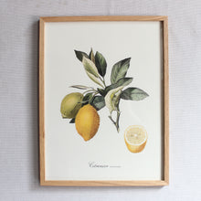 Load image into Gallery viewer, Botanical Print - Large