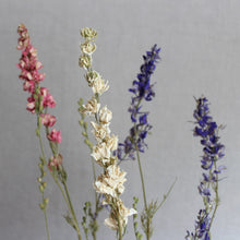 Load image into Gallery viewer, Larkspur