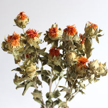 Load image into Gallery viewer, Safflower Carthamus