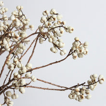 Load image into Gallery viewer, Tallow Berries - Dried