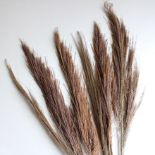 Load image into Gallery viewer, Broom Grass - Dried