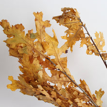 Load image into Gallery viewer, Oak Leaves - Preserved