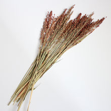 Load image into Gallery viewer, Broom Corn -  (Sorghum)