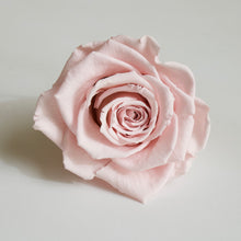 Load image into Gallery viewer, Roseheads - Preserved 2.5""