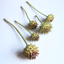 Load image into Gallery viewer, Artichokes on Natural Stems