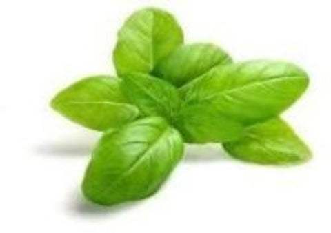 Basil infused Olive Oil