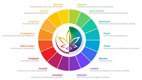 There are many key terpenes that exist in cannabis. Each terpene has its own effect and is a piece to the puzzle that makes up the entourage effects of cannabis.
