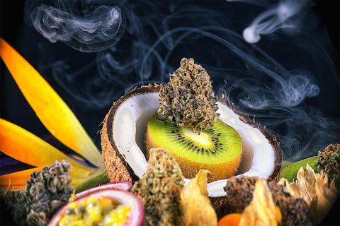 What do coconuts, kiwis, mangoes, and cannabis all have in common? TERPENES. They all contain distinguishing aromatic terpenes, which depending on method of consumption can greatly impact how a person feels.