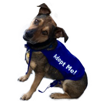 """Adopt Me"" Dog Rescue Cape - Royal Blue Medium"