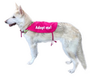 """Adopt Me"" Dog Rescue Cape - Bright Pink Medium"