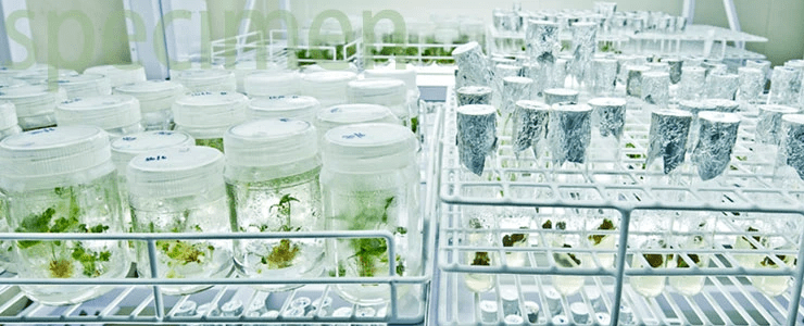Herb specimens - New Research Areas - The Himalaya Drug Company
