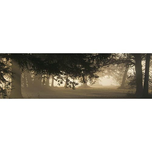 Misty Woods Photo Background Illustration
