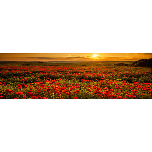 Poppy Field Personalized Photo Backdrop
