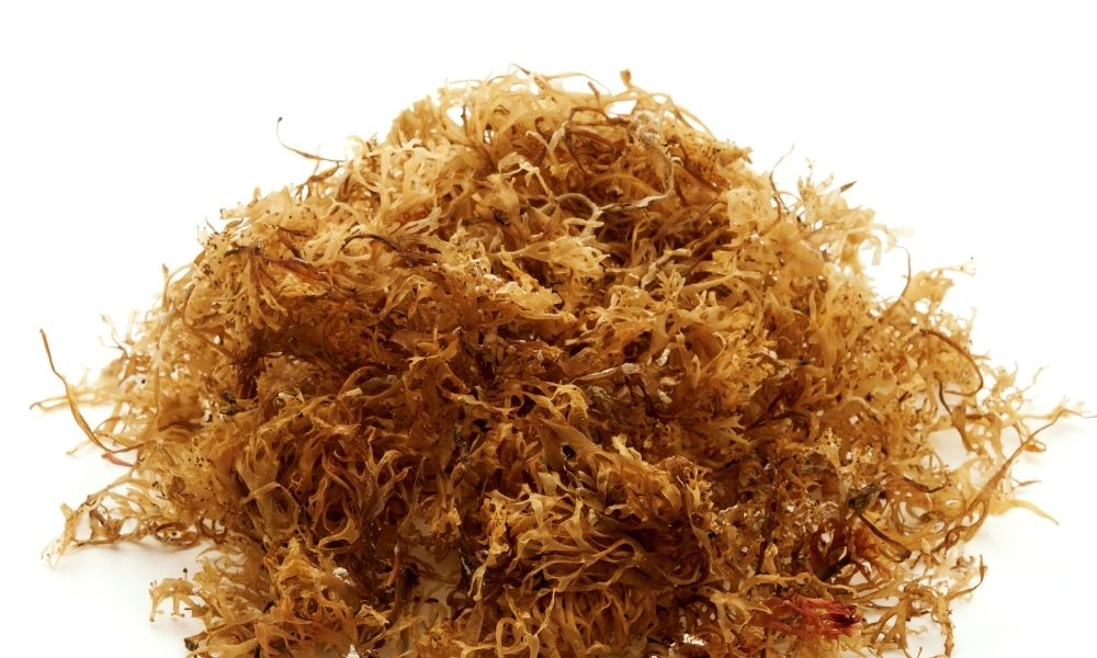 Real vs. Fake: How To Tell Your Sea Moss Is the Real Deal