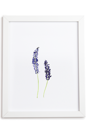 watercolor art print lavender good sheila local seattle artist | pipe and row