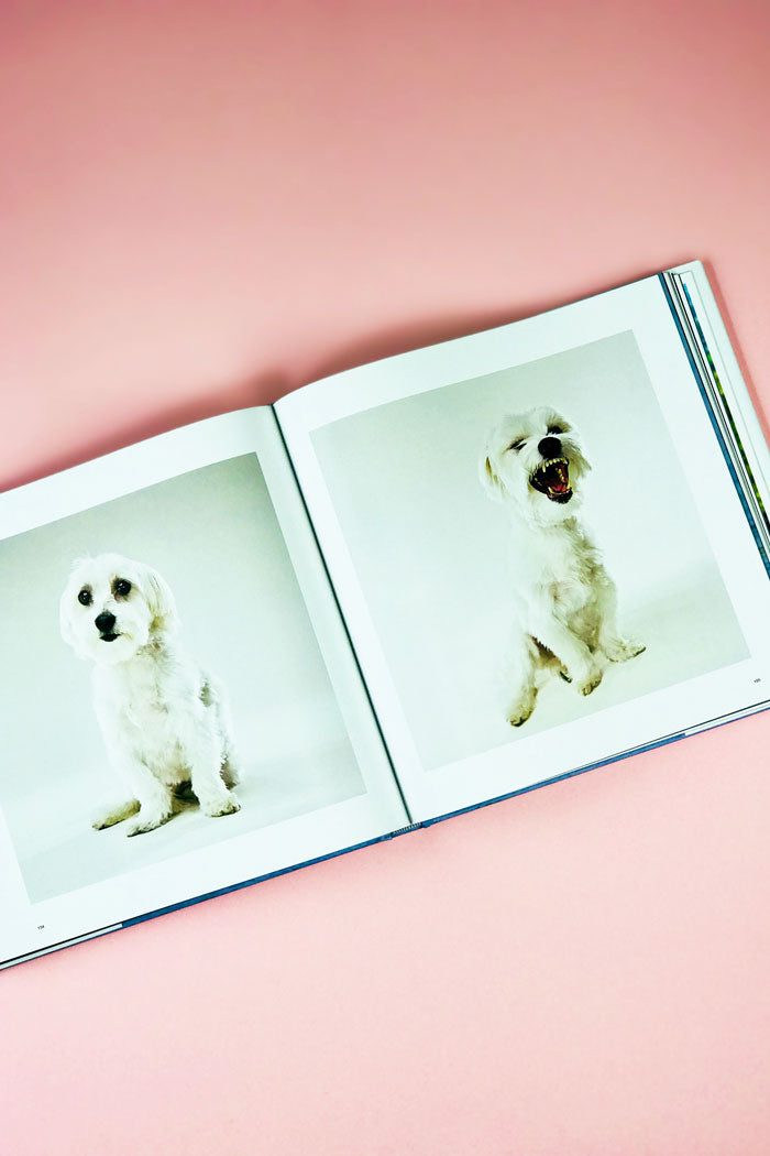 The Life and Love of Dogs coffee table book Lewis Blackwell Pipe and