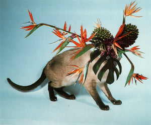 CATS AND PLANTS SECOND EDITION