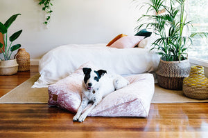 velvet slouch dog bed rose large nice digs | pipe and row boutique