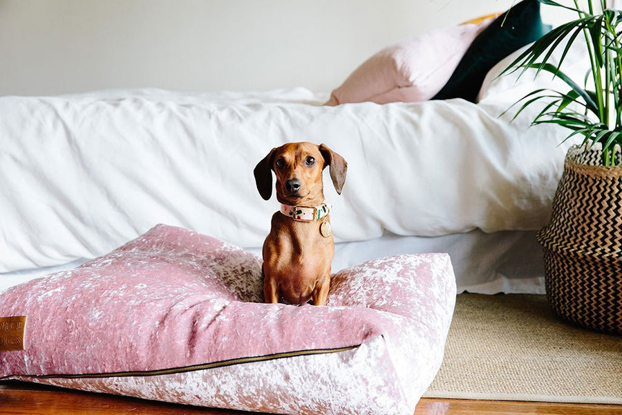 velvet slouch dog bed rose small nice digs | pipe and row boutique