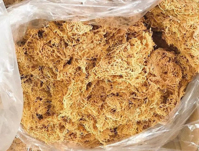 St. Lucian Gold (Raw, Wild-Crafted) | 2oz