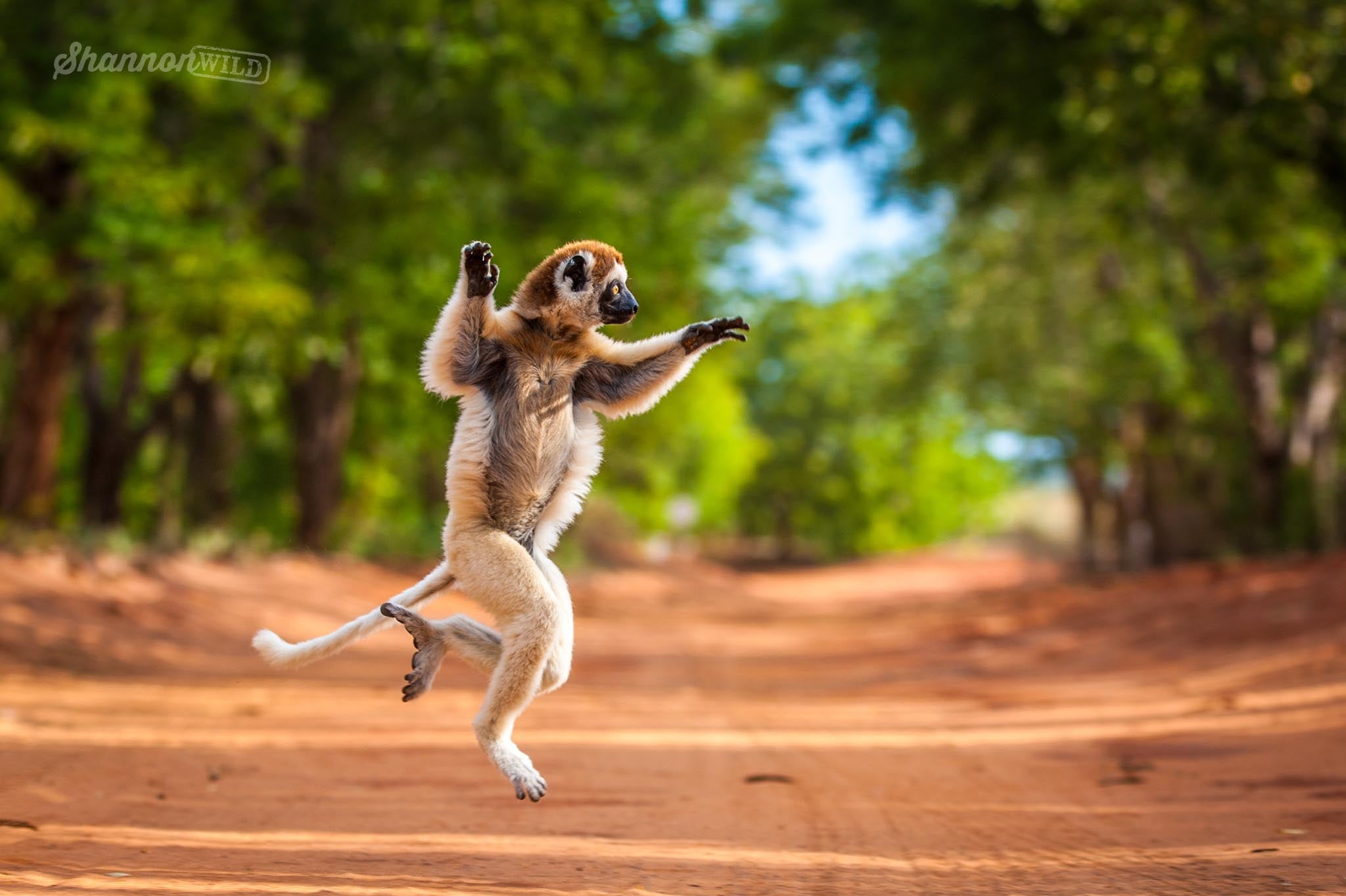 Dancing_Animals_By_Shannon_Benson_ShannonWild