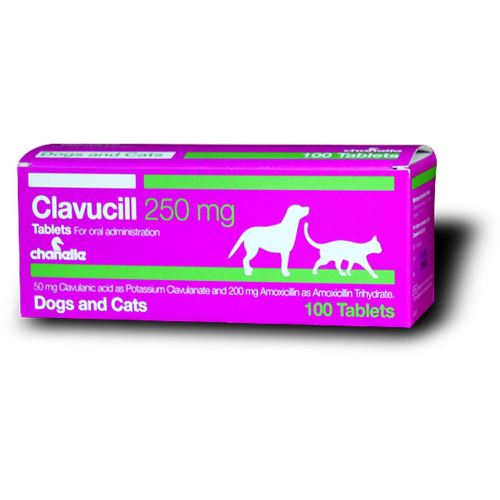 CLAVUCILL 250 mg - 200 mg amoxicillin / 50 mg clavulanic acid - 10 tablets (synulox) for DOG & CAT