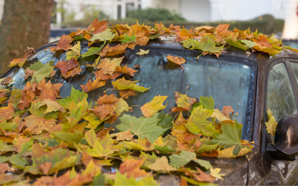 Autumn Leaves Can Damage The Paintwork