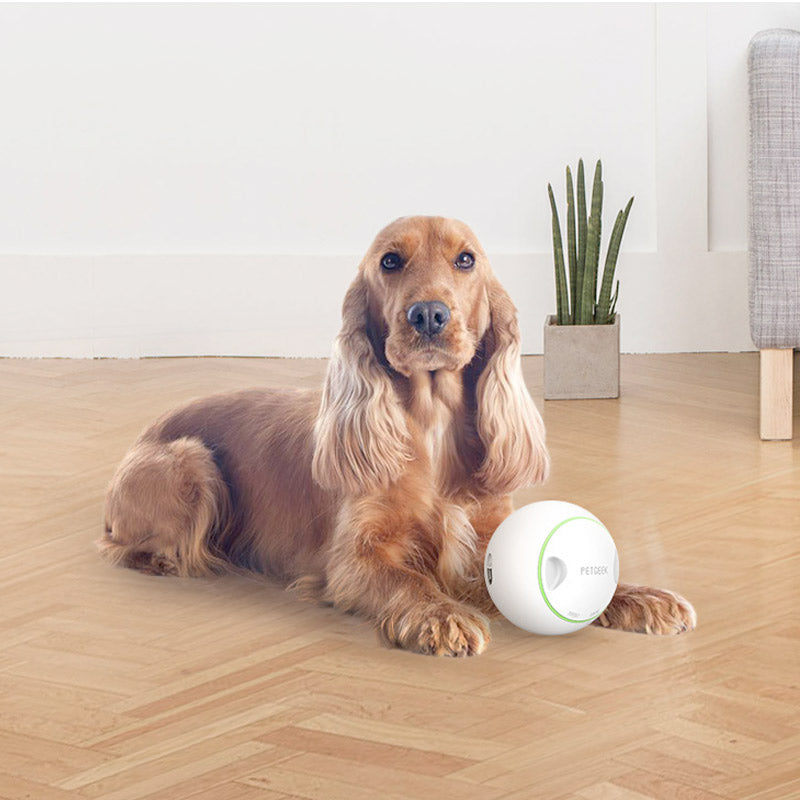Foodie Orb – Automatic Rolling Treat Ball