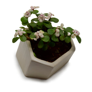 Hexagonal Contemporary Design Planter