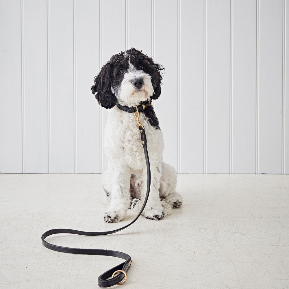 Black Padded Leather Dog Lead