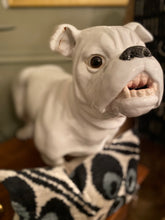 English Bulldog Vintage Large Ceramic - The Sweetwood Collection