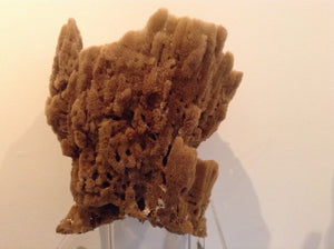 Sea sponge double - The Sweetwood Collection